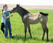 2011 buckskin filly - Zippos Tom Dooley x Zippo String of Pearls